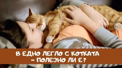 В едно легло с котката – полезно ли е?