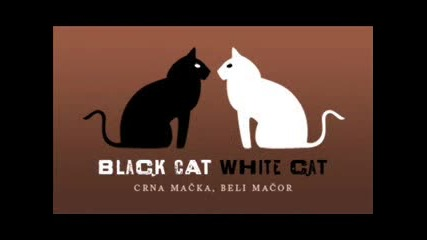 Църна котка бел котарак:д