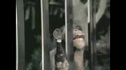 Реклама На Бира Budlight - Маймуната