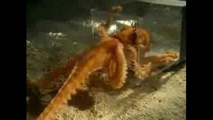 Октопод Излиза През Много Малка Дупка