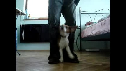 My Dogy - Метъл