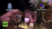 Spain: Police seize 200kg of cocaine concealed in PINEAPPLES