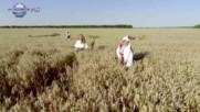 Ивелина Колева - Добруджа на хляб мирише 2016