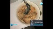 Сервираха умряла мишка в закуската на дете