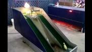 Патенца се пързалят по пързалка