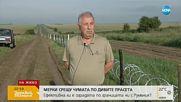 СРЕЩУ ЧУМАТА ПО ДИВИТЕ ПРАСЕТА: Мирис на вълк ще гони животните, идващи от Румъния