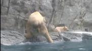 Бебе мече пада в ледената вода, но майка му веднага се втурва да го спасява