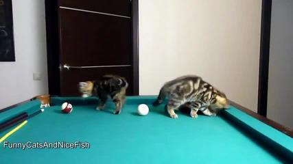 Котета играят билярд