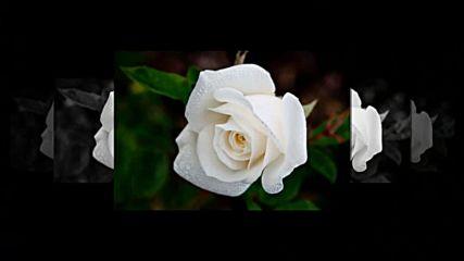 Tango de roses / Billy Vaughn