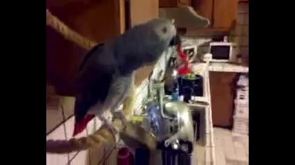 Папагал псува собсвеника си