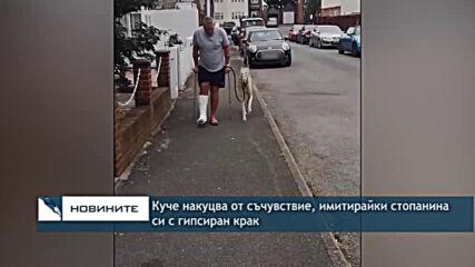 Куче накуцва от съчувствие, имитирайки стопанина си с гипсиран крак