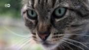 Вашата котка знае как да Ви върти на пръста си