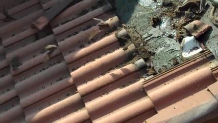 Какво живее на покрива?