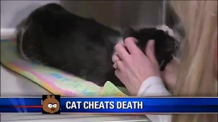 Котка се връща при стопаните си, след като е погребана преди 5 дни