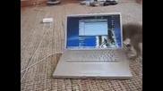 Коте си играе с лаптоп