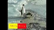 Шегата на Пингвините
