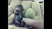 И маймунките имат гъдел