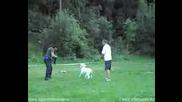 Dogo Argentino Attack