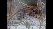 Radka Toneff - Winter Poem