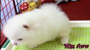 Малко Пухкаво Кученце : )