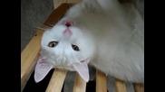 Яко Говорещо коте !