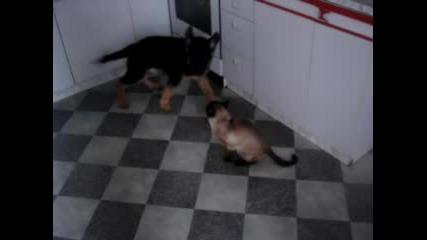 Немска Овчарка И Сиамска Котка