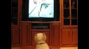 Лудо куче полудява докато гледа Animal planet