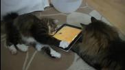 Котки играят с Ipad