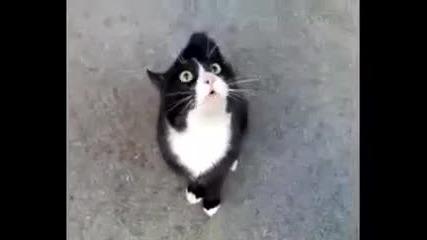 Котка оплаква скапания си живот!