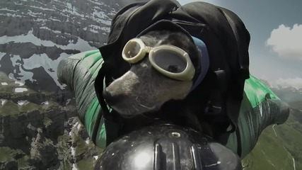 Wingsuit • Мъж скача заедно със своето куче !