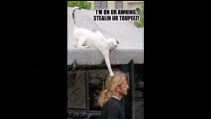 Комплилация От Смечни Котки