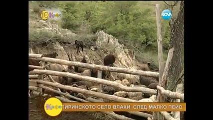 Редки породи животни в подножието на връх Вихрен в Пирин - На кафе (14.05.2014)