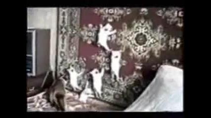 Най-лудите Котки 100% Смях !!!