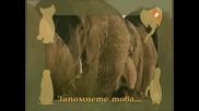 Енциклопедия На Животните - Слон