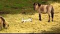 Amazing Galloping Horses 1080p Hd