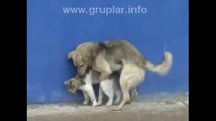 Какво Прави Това Куче С Това Коте ?