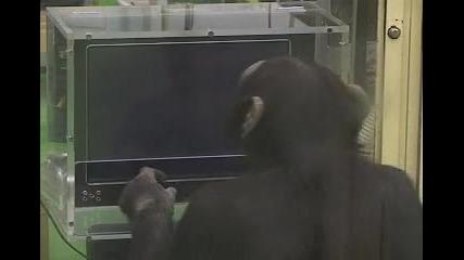 Маймуната с феноменална памет