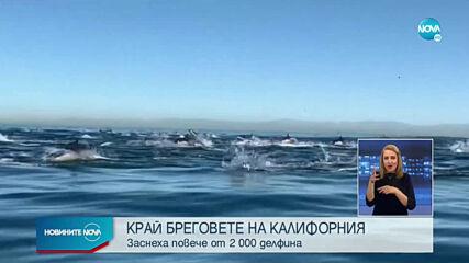 Над 2 хиляди делфина бяха забелязани край южния бряг на Калифорния