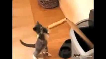 Коте боксьор (смях)