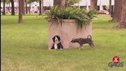 Плюшено срещу истинско куче