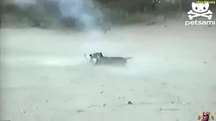 Най-смелото куче хваща пиратка!