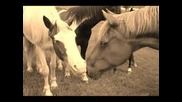 Horses Stop Horse Slaughter And Abuse