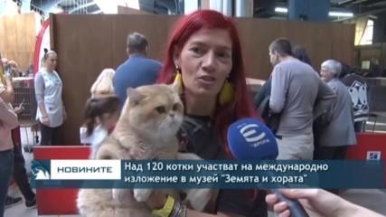 Над 120 котки се състезават на изложба в София