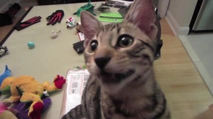 Смееща се котка