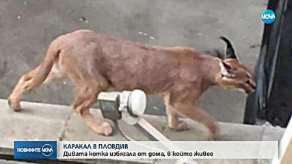 Рис се разходи по улиците на Пловдив
