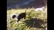 Кучовци В Радомир