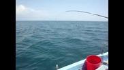 малкия слон от Черно море