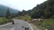 Не е лесно да си овчар!