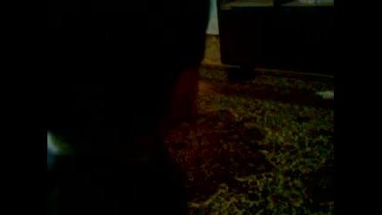 Видео - (2014-11-26 22:24:48)