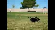 Най - Грамадния паяк на света